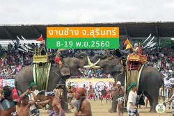elephants surin 2017