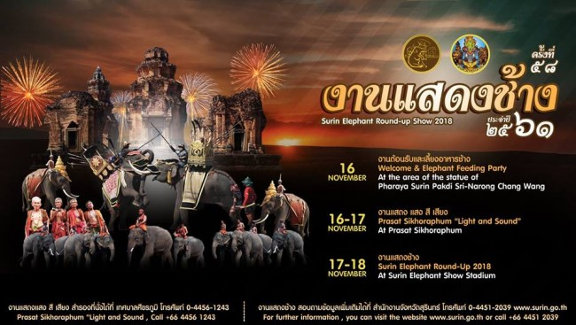 elephants surin 2018