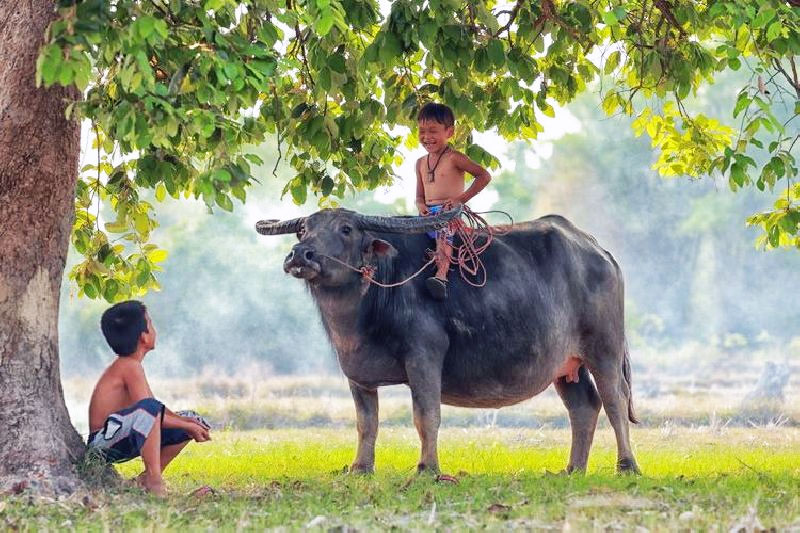 buffalo_children_01.jpg